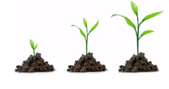plants-new
