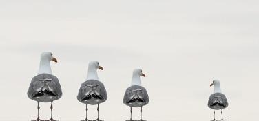 gulls-2662550_640