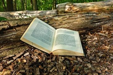 book-3356154_1920